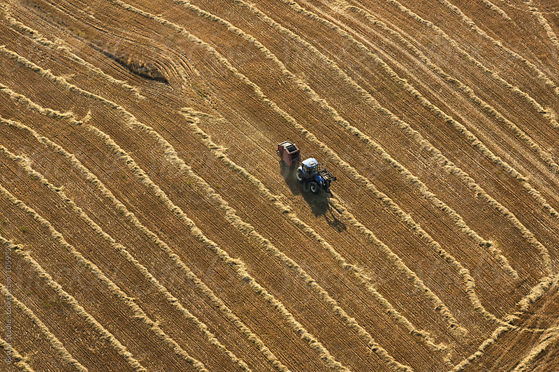 Aerial view of a tractor working in a wheat field in summer by Bisual Studio for Stocksy United