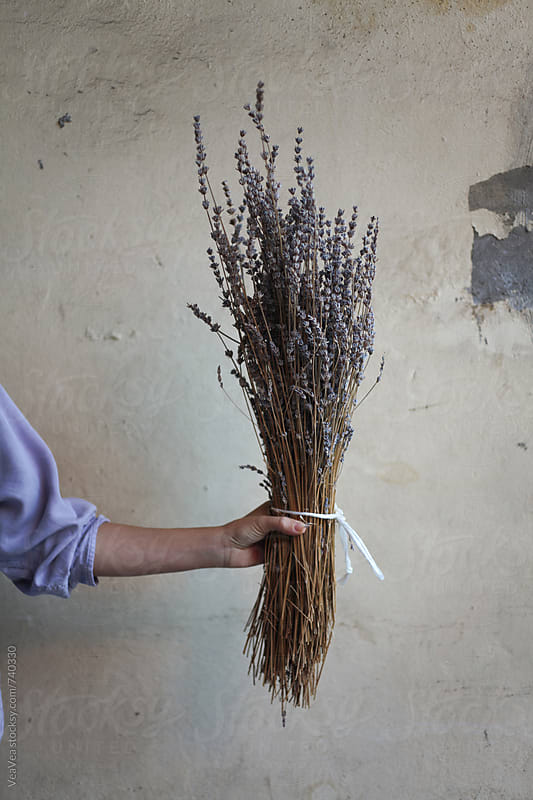 Female hand holding a bouquet of lavender flowers in front of a rural wall by VeaVea for Stocksy United