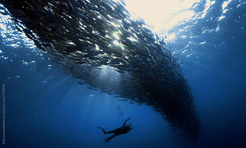 diver and school of fish by Nat sumanatemeya for Stocksy United