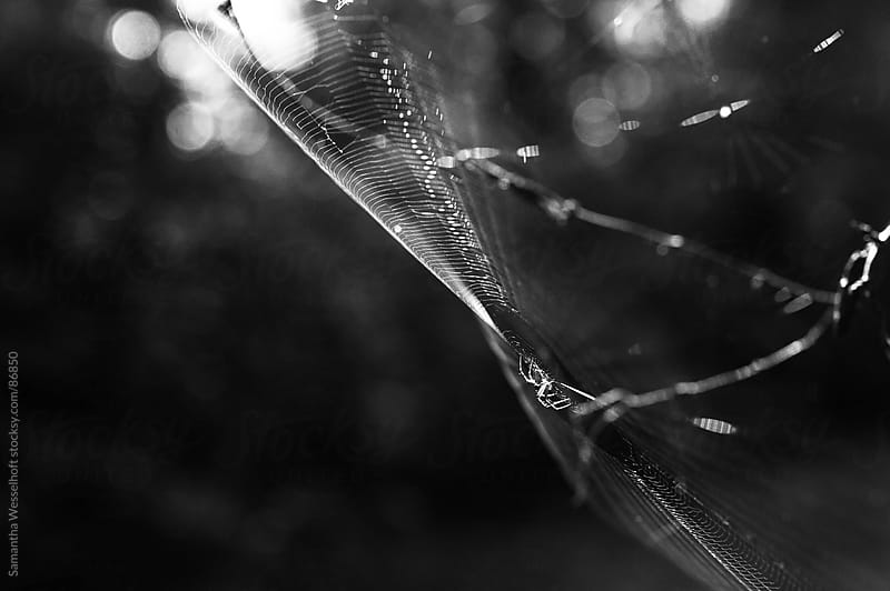 spider in a web landscape view by Samantha Wesselhoft for Stocksy United