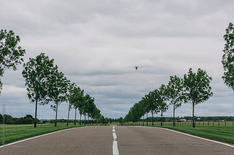 An avenue of trees lining a road through countryside. Central position by Paul Phillips for Stocksy United
