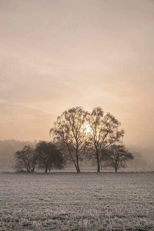 Sunrise through fog on a frosty morning. Santon Downham, Norfolk, UK. by Liam Grant for Stocksy United