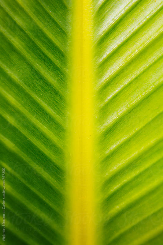 Green tropical leaf detail by Alejandro Moreno de Carlos for Stocksy United