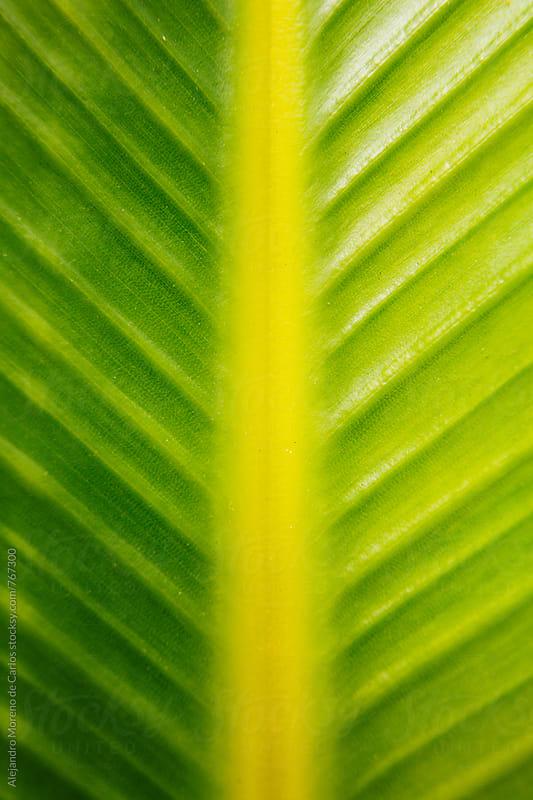 Green tropical leaf detail by Alejandro Moreno de Carlos for Stocksy United