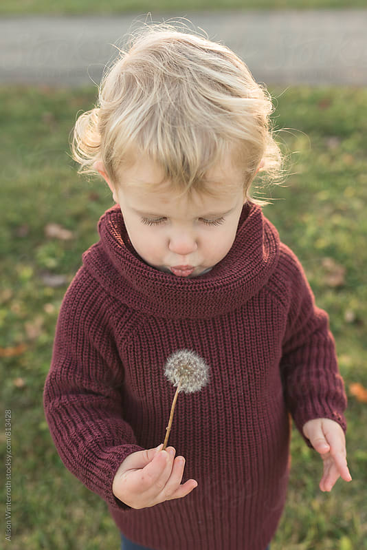 Toddler Holding A Dandelion by Alison Winterroth for Stocksy United