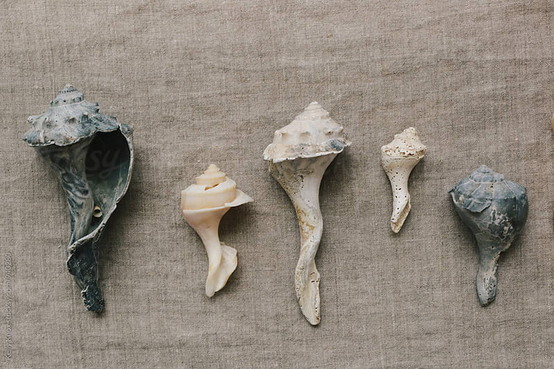 row of weathered conch shells by Kelly Knox for Stocksy United