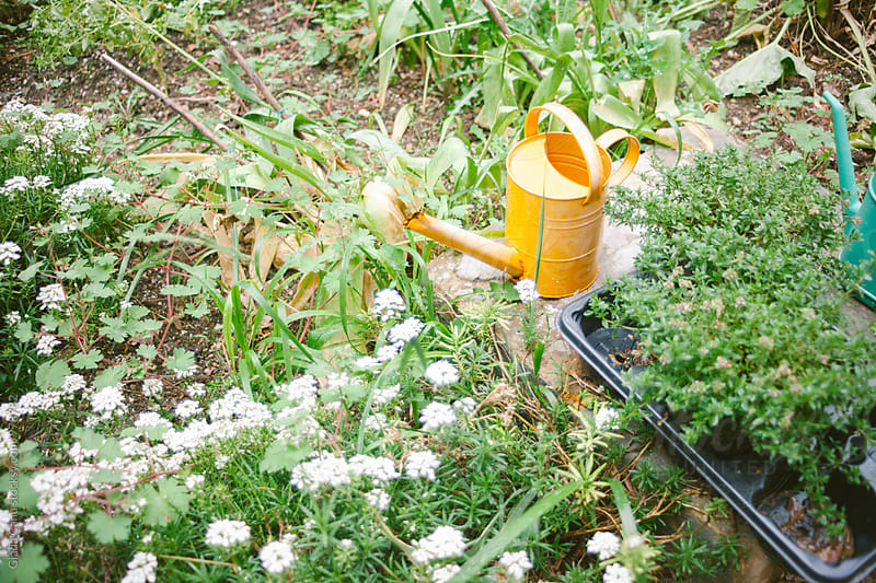 Watering can in a garden by Giada Canu for Stocksy United