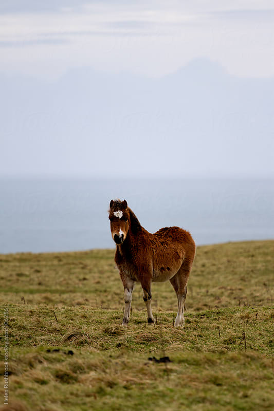 A wild Welsh pony by Helen Rushbrook for Stocksy United