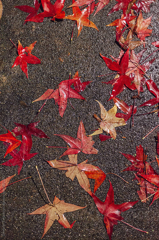 Winter in the park. Colorful fallen leaves on the park path by Dimitrije Tanaskovic for Stocksy United