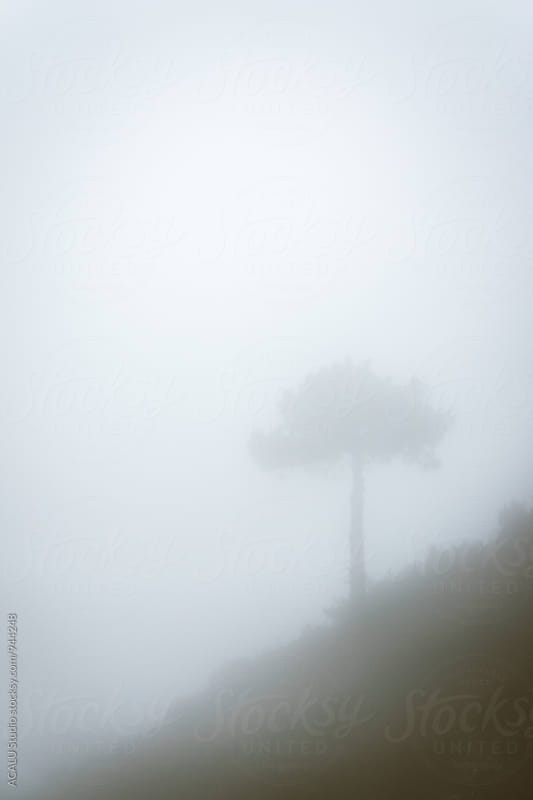 Tree in the mountain through the fog by ACALU Studio for Stocksy United