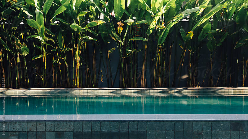 Serene View of a Swimming Pool Surrounded by Palm Leaves by Nemanja Glumac for Stocksy United