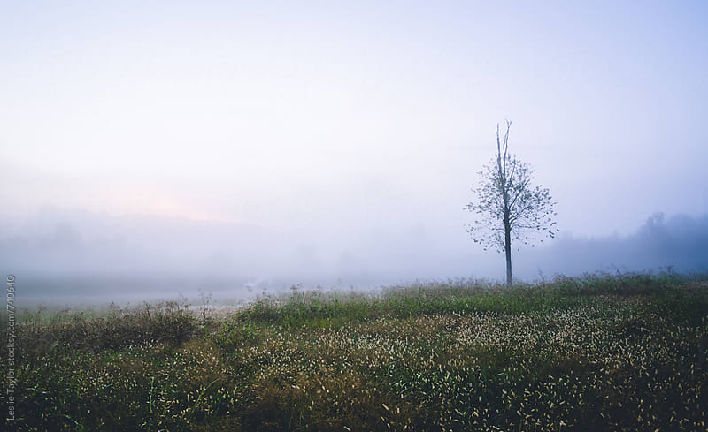 Morning Fog In A North Carolina Field by Leslie Taylor for Stocksy United