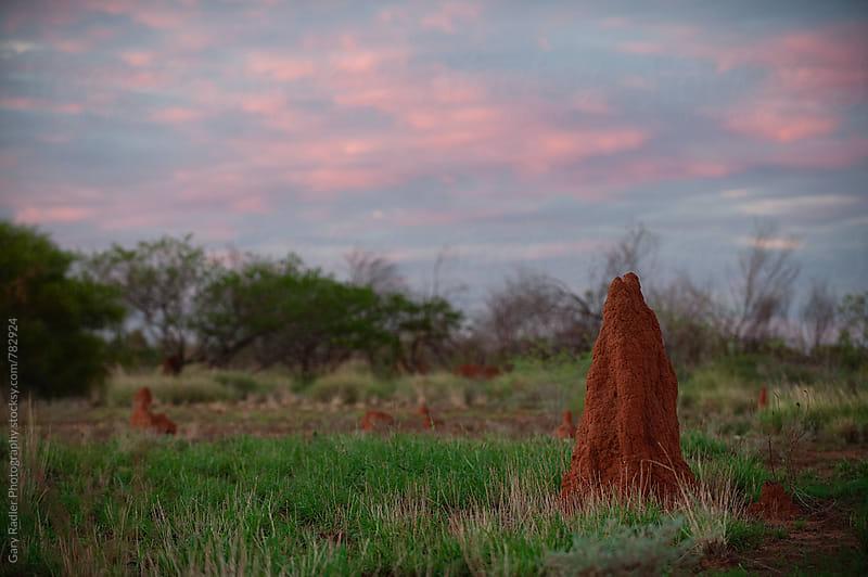 Ant Nest in the Australian Outback by Gary Radler Photography for Stocksy United