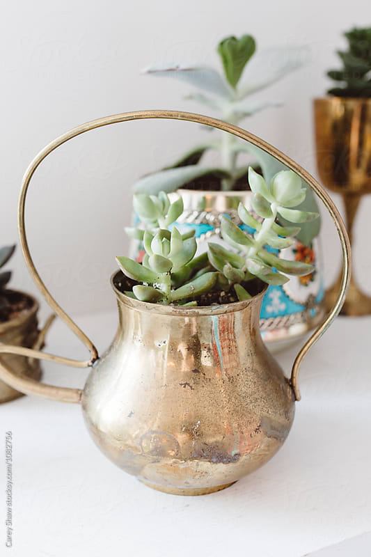 Plants in vintage pots on display in store by Carey Shaw for Stocksy United