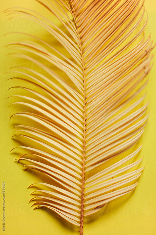 Palm leaf on a yellow background by Marija Kovac for Stocksy United
