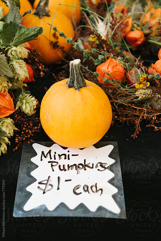 Mini pumpking with fall and Thanksgiving holiday decorations and a price tag on a black table by Mihael Blikshteyn for Stocksy United