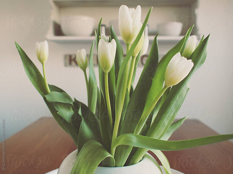 A bouquet of fresh tulips in a vase on a kitchen table by Greg Schmigel for Stocksy United