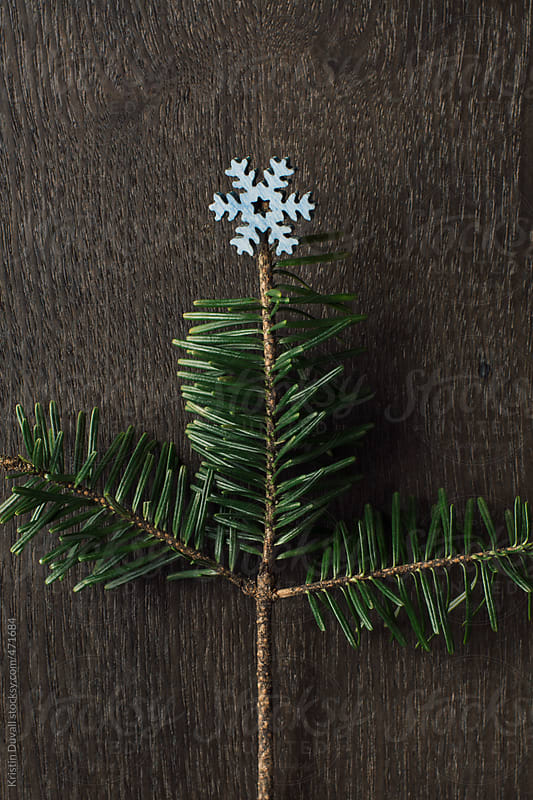 Miniature pine branch Christmas tree by Kristin Duvall for Stocksy United