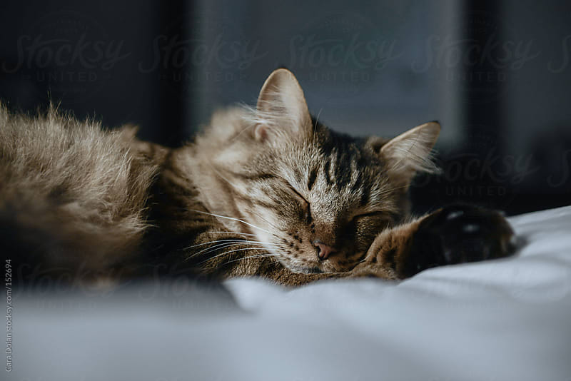 Tabby cat sleeping by Cara Dolan for Stocksy United