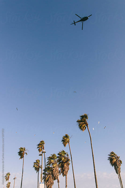 Helicopter flying over beach with palm trees by Alejandro Moreno de Carlos for Stocksy United