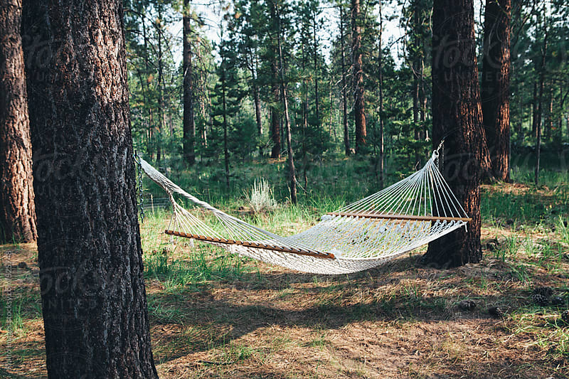Hammock hanging between two large pine trees in forest by Paul Edmondson for Stocksy United