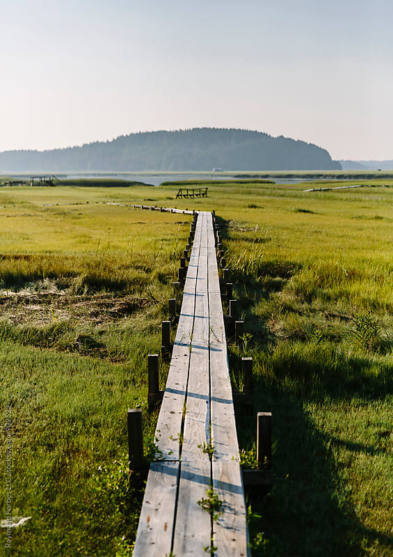 Boardwalk through Marsh by Raymond Forbes LLC for Stocksy United