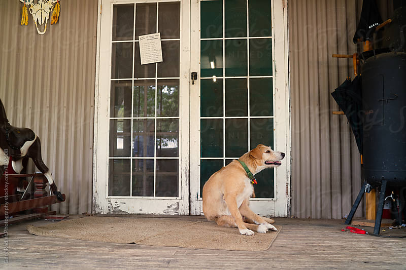 Dog on Front Verandah by Gary Radler Photography for Stocksy United