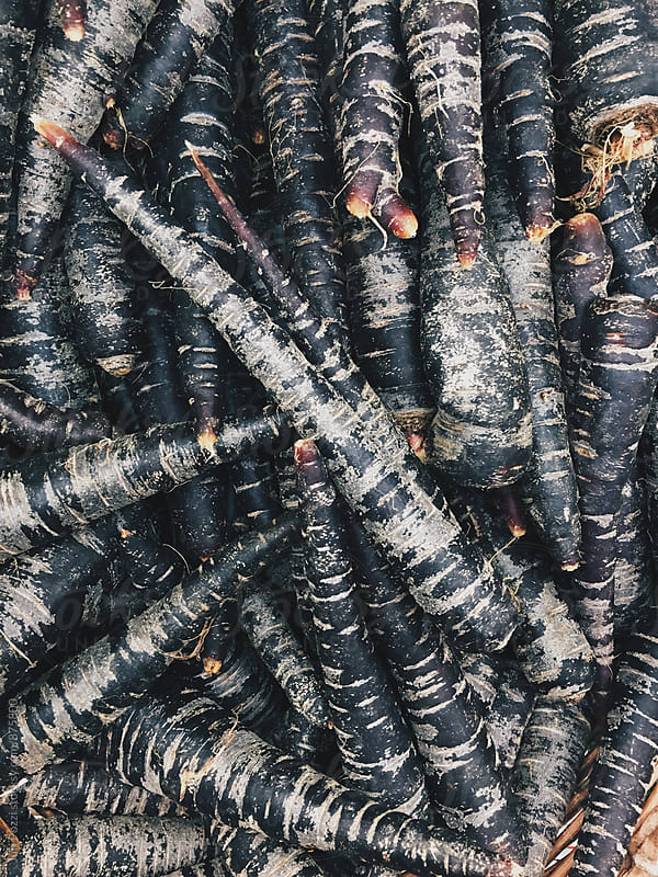 black carrots by Juri Pozzi for Stocksy United