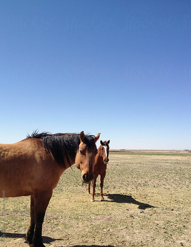 Horses standing in field in New Mexico by Nicole Mlakar for Stocksy United