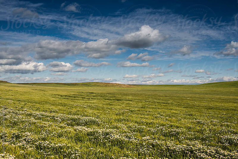 green meadow with a great cloudy sky by Javier Pardina for Stocksy United