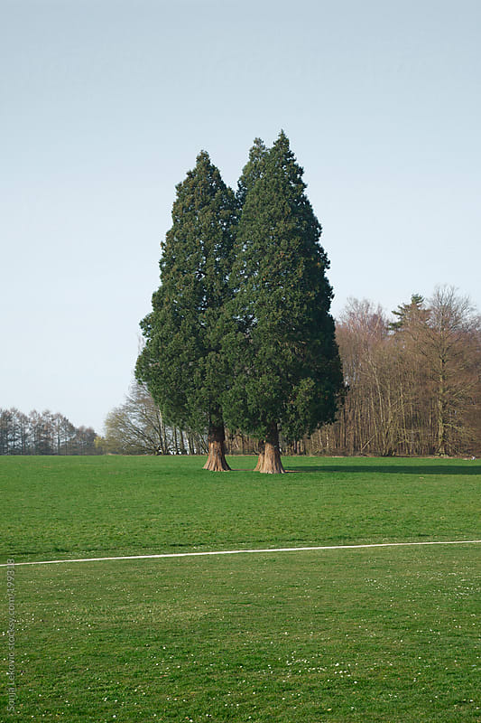 two trees in a park by Sonja Lekovic for Stocksy United