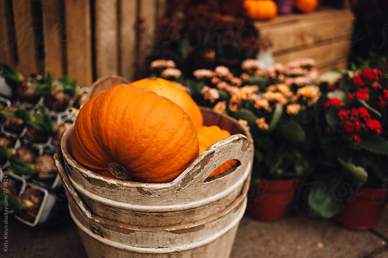 Pumpkins in a bucket by Kitty Gallannaugh for Stocksy United