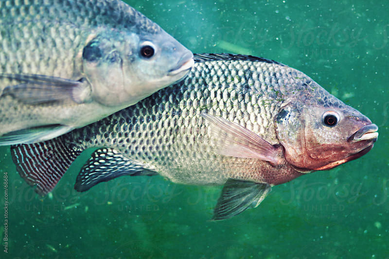Fish underwater by Ania Boniecka for Stocksy United