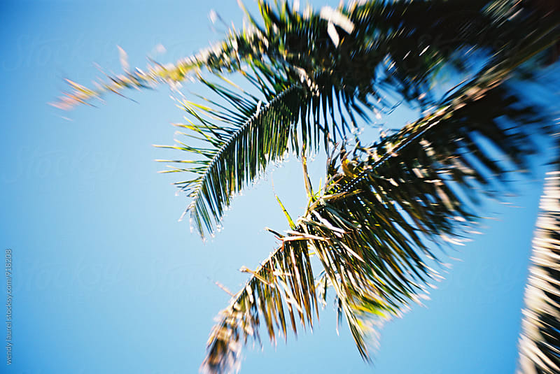 palm leaves against bright blue sky by wendy laurel for Stocksy United