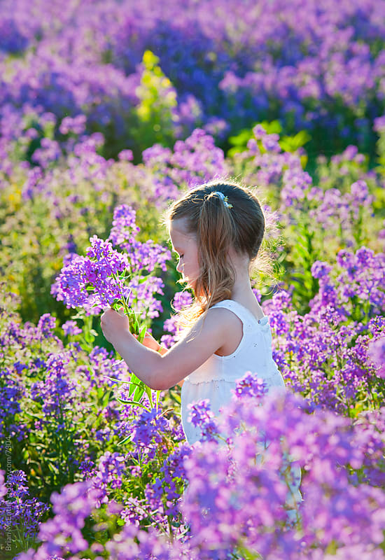Young girl in white dress, sun kissed, moving through Lavendar by Brian McEntire for Stocksy United