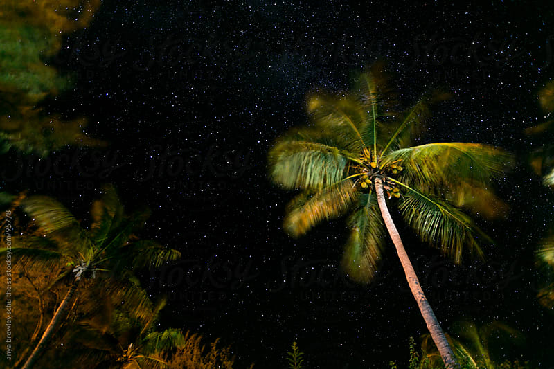 Palm tree on starry night by anya brewley schultheiss for Stocksy United