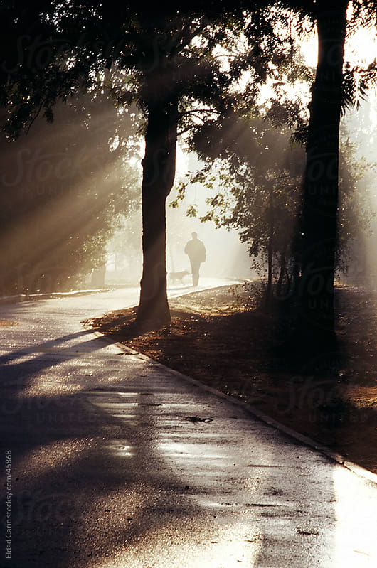 Man and Dog in Grove Path at Dawn by Eldad Carin for Stocksy United