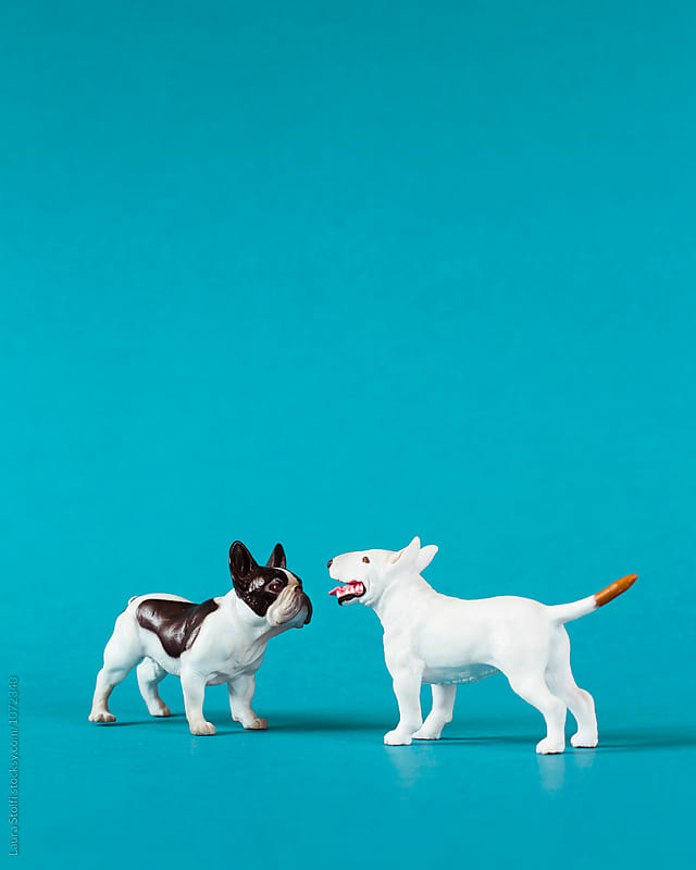 Two miniature dogs meet and greet by Laura Stolfi for Stocksy United