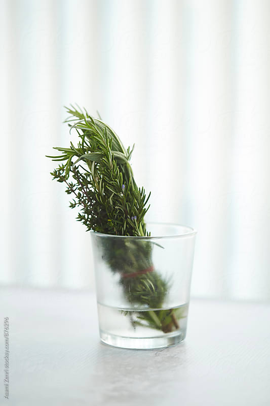 Herbs by Asami Zenri for Stocksy United