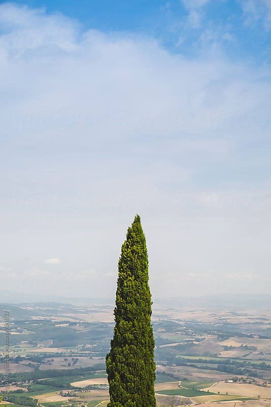 Tuscan Cypress Tree over Landscape and Sky by Giorgio Magini for Stocksy United