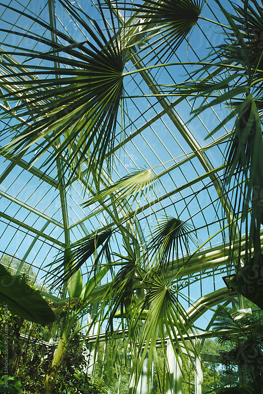 palm trees and glass architecture by Sonja Lekovic for Stocksy United