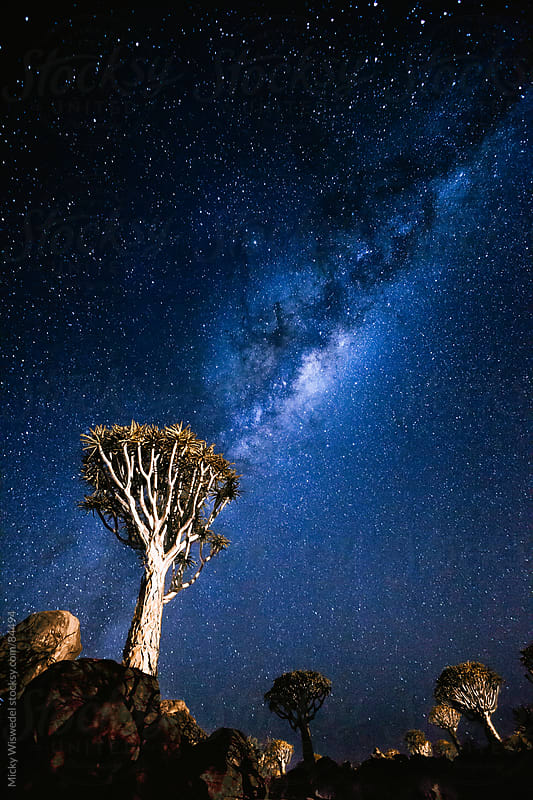 Quiver tree's and stars at night in Namibia by Micky Wiswedel for Stocksy United