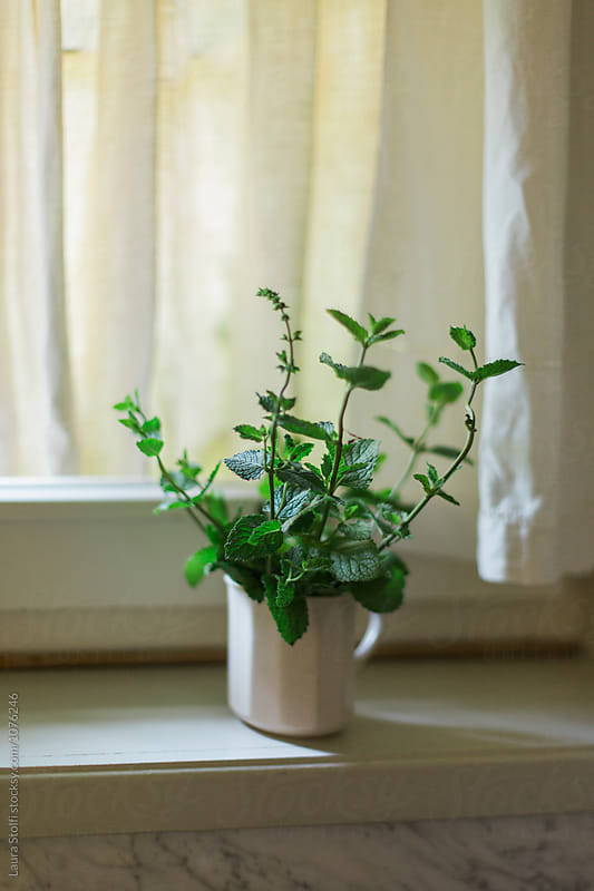 Fresh mint twigs in cup on kitchen windowsill by Laura Stolfi for Stocksy United