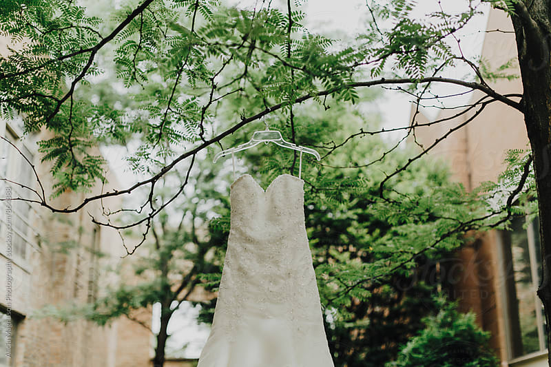Wedding Dress Hanging from Tree Branch by Alicia Magnuson Photography for Stocksy United