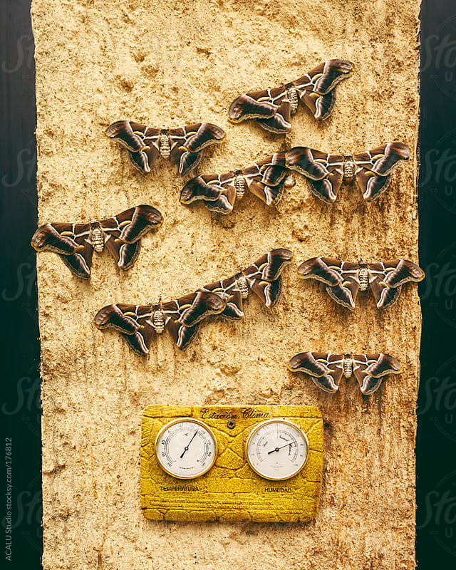 Butterflies on the wall with thermometer by ACALU Studio for Stocksy United