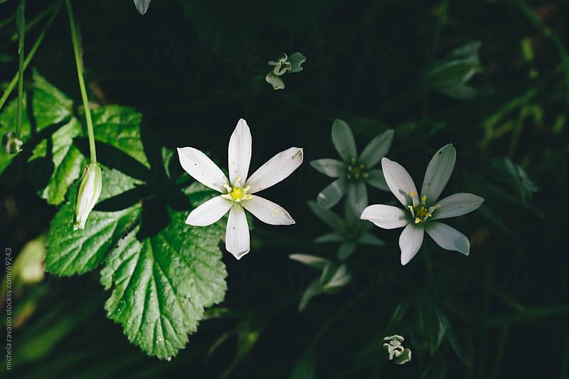 Flowers by michela ravasio for Stocksy United