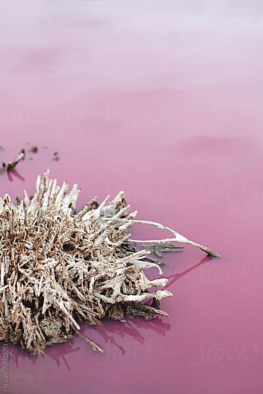 close up of dead trees and bushes at the side of a pink salt lake by Natalie JEFFCOTT for Stocksy United