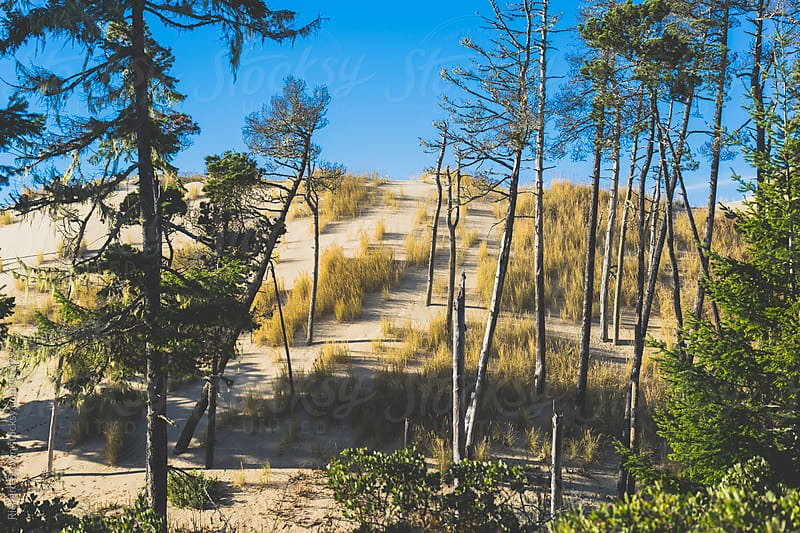 Oregon Sand Dunes by Richard Brown for Stocksy United