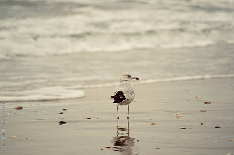 Bird on beach by Crissy Mitchell for Stocksy United