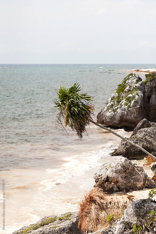 Palm Tree Along the Caribbean Coast by Brandon Alms for Stocksy United